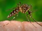 LIRAa aponta sete cidades em alerta e uma em risco para dengue no AM