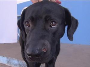 Cachorro que levou tiro no focinho teve alta nesta sexta (29) (Foto: Reprodução/ TV Globo)