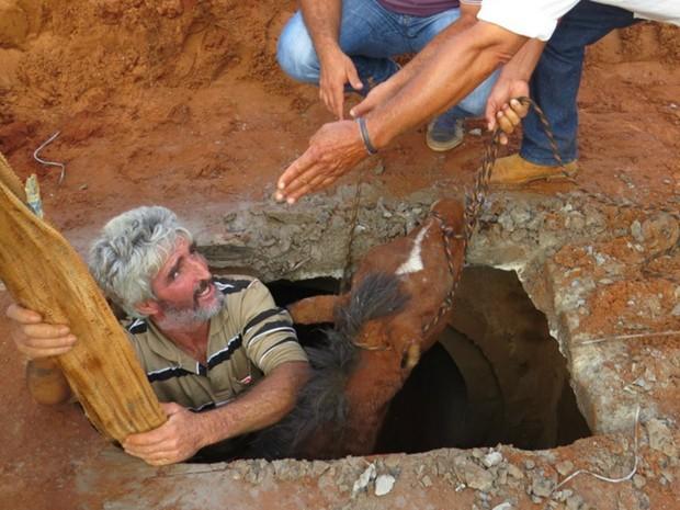 Morador entrou no esgoto para facilitar o resgate do cavalo (Foto: Rodrigo dos Santos/Rádio 90 FM)