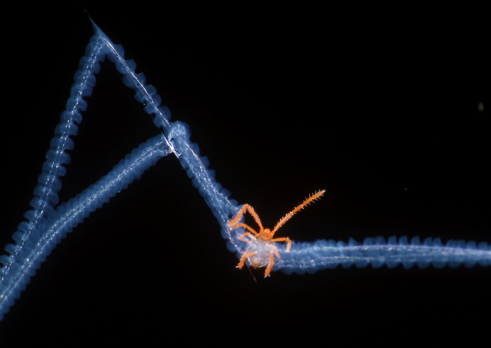 Microimagem registra ácaro preso em uma teia de aranha, em clique feito por Bernardo Segura e que ganhou uma menção honrosa (Foto: Bernardo Segura / Divulgação)
