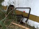 Ônibus cai em ribanceira e deixa feridos em Guapiaçu