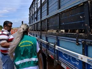 Fiscalizações móveis ocorrem para evitar a proliferação de doenças entre os animais e risco à saúde pública (Foto: Reprodução/Rede Amazônica em Roraima)