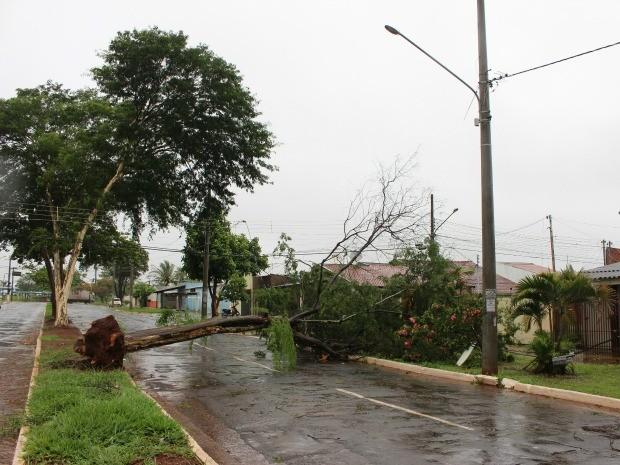 Árvore caiu na avenida Florestal em Campo Grande (Foto: Glaucea Vaccari/G1 MS)