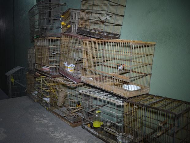 As aves vão ser encaminhadas ao Centro de Triagem de Animais Selvagens (Cetas), onde ficarão durante 40 dias antes de serem liberadas em seu ambiente natural (Foto: Walter Paparazzo/G1)