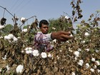 Leilão de estoques de algodão na China pode pressionar cotação global