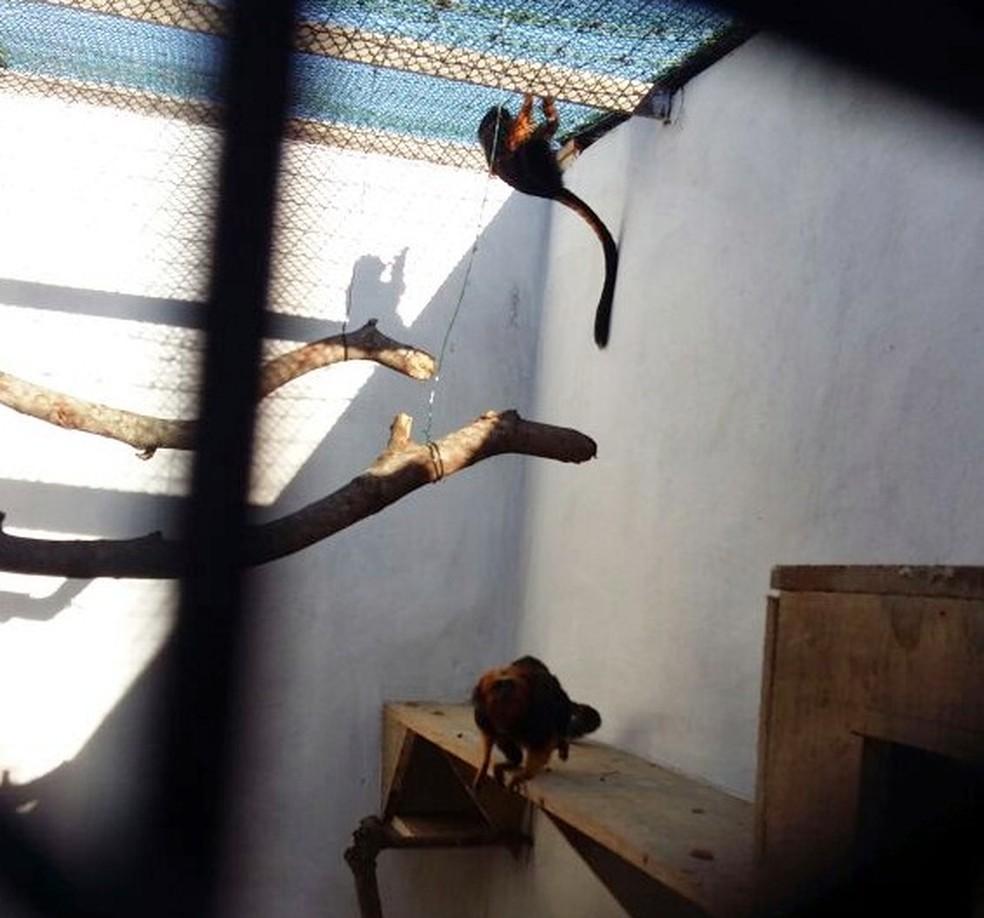 Micos chegaram nesta quarta (19) ao Aquário de Natal (Foto: Douglas Brandão )