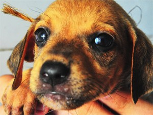 Animais vão passar por procedimento cirúrgico de esterilização (Foto: Dayse Euzébio/Secom-JP)