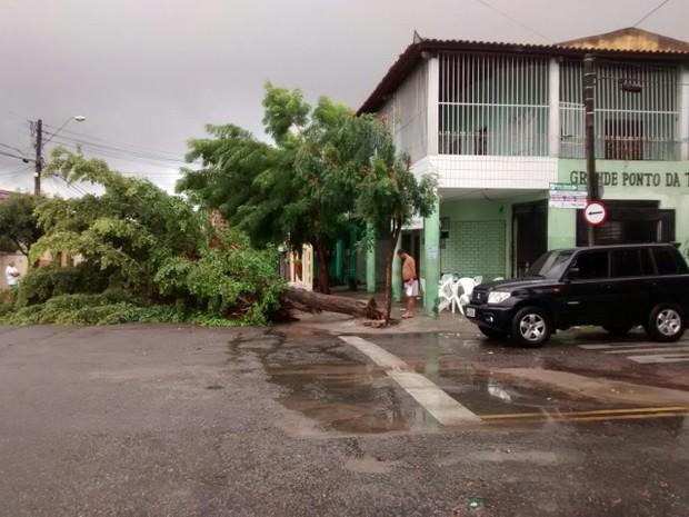 No Bairro Jardim das Oliveiras, chuva e vento fortes derrubaram árvore (Foto: Arquivo pessoal)