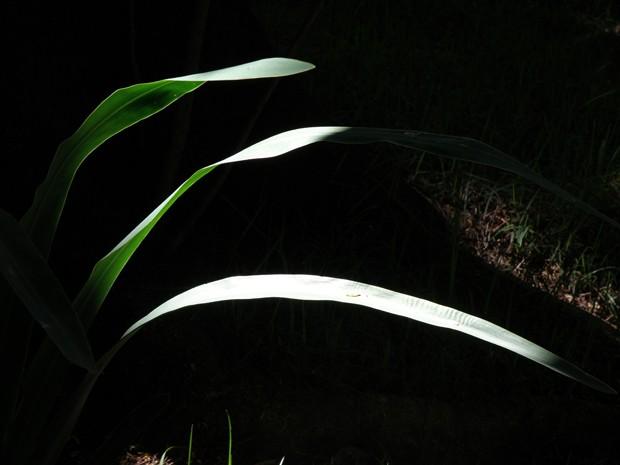 Imagem de nova série do fotógrafo Wilson Baptista; foto foi feita dentro de sua casa em BH. (Foto: Wilson Baptista/Divulgação)