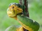 Animais resgatados de área atingida por usina no Pará voltam à natureza