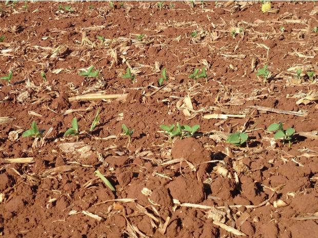 Plantio da soja em Mato Grosso do Sul está na reta final (Foto: Diego Silva/Aprosoja/MS)