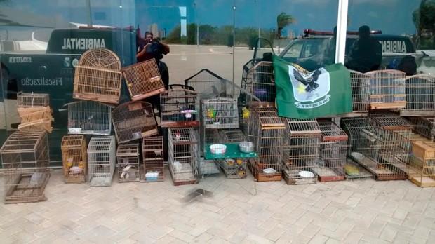 Pássaros recolhidos passarão por uma avaliação e devem ser devolvidos à natureza (Foto: Divulgação/Guarda Ambiental de Natal)