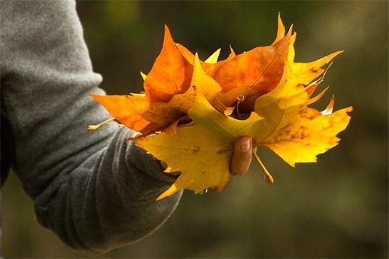 Punhado de folhas ocres  (Foto: © Maya Brasiliano )