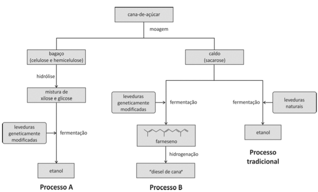 Processos de fermentação da cana (Foto: Reprodução/Fuvest)