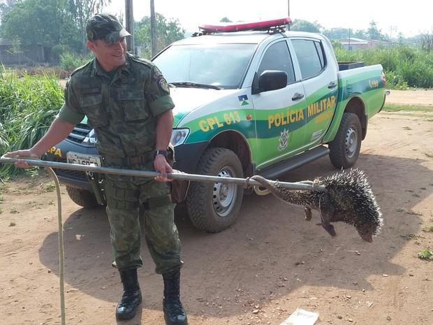 Animal foi encontrado em quintal de residência no Nossa Senhora de Fátima (Foto: Polícia Ambiental/Divulgação)