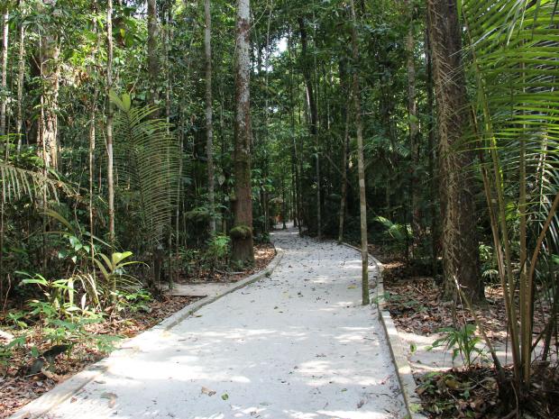 Trilhas chegam a 3 km de extensão; lá, visitantes podem ser surpreendidos por cobras e outros animais (Foto: Camila Henriques/G1 AM)