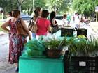Agricultores orgânicos vendem produtos em feira em Cuiabá (MT)