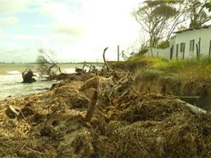 Praia do Leste, em 2014, no último registro da especialista (Foto: Célia Regina de Gouveia Souza/Arquivo Pessoal)