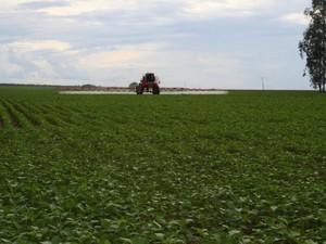 Pulverização de lavoura de soja (Foto: Amanda Sampaio/G1 MT)