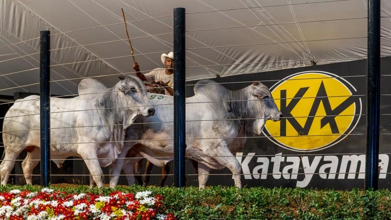 leilão-katayama (Foto: Divulgação)