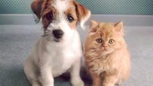 Ai, que fofo! Pela 2ª vez, o 'Passeio Canino' ocorre em  Guarapuava ( Reprodução/Redes Sociais)