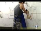 Funcionário de petshop que batia em cães é condenado no Rio