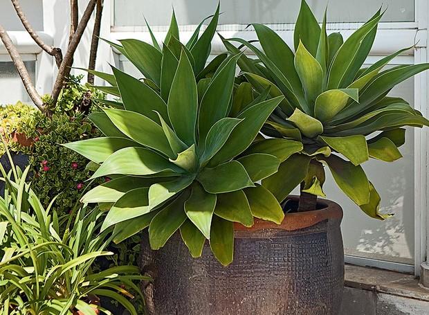 21 plantas muito resistentes casa e jardim paisagismo - Plantas de exterior resistentes ...