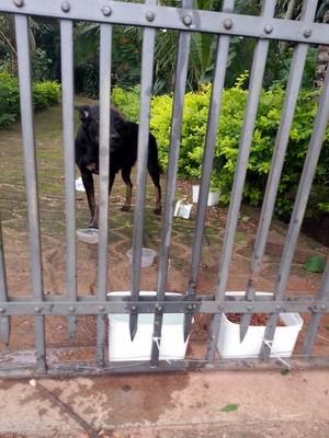 Cadela abandonada em casa de São Pedro (Foto: Natalia Matsuka/Arquivo pessoal)
