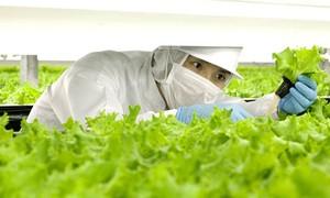 Empresa japonesa abrirá fazenda operada por robôs