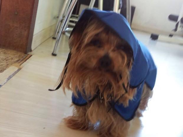cachorro, roberta, porto alegre (Foto: Arquivo Pessoal/Isabel Maciel)