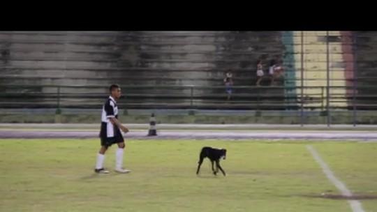 Cão 'alvinegro' invade o campo após o gol de empate do time de mesma cor