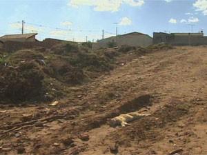Três gatos foram encontrados mortos em terreno de Franca (SP) nesta quinta-feira (5) (Foto: Reprodução/EPTV)