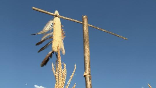 Reveja: criatividade é estratégia para proteger lavouras de ataques de aves