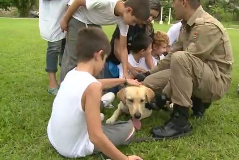 Marley foi treinado para atuar na terapia de autistas (Foto: Reprodução RBS TV)