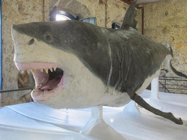 Tubarão tem 5,5 metros de comprimento e 3,5 toneladas é exposto em Cananéia, no litoral de São Paulo (Foto: Anna Gabriela Ribeiro/G1)