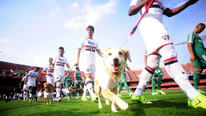 São Paulo, cachorros, Morumbi (Foto: Marcos Ribolli)