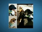 Ladrões invadem casa e furtam TVs, R$ 40 mil em joias e dois cães no DF