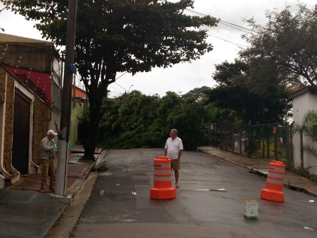 Avenida ficou interditada após queda de árvore em Jundiaí (Foto: Eduardo Vergílio/TEM Você)