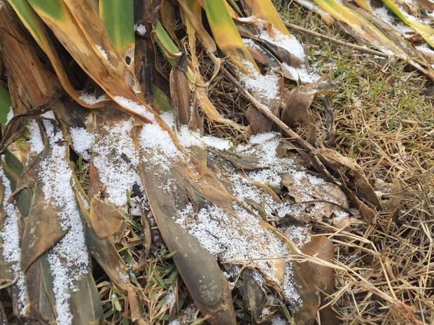 Por volta das 8h30 ainda havia neve acumulada em São Joaquim (Foto: Edivaldo Dondossola/RBS TV)