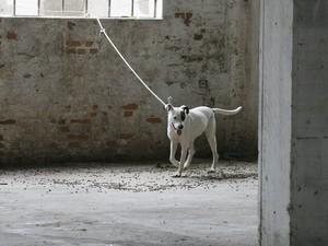 No depósito onde estavam os cães, fiscais da prefeitura encontraram também ratos mortos (Foto: Vanessa Silva/PMPA)