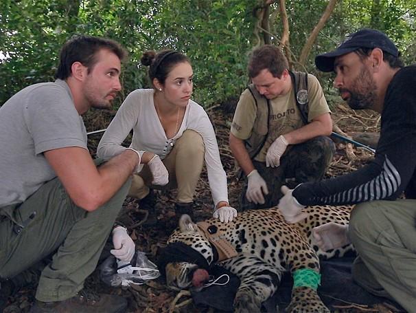 No Pantanal, Max e Amanda ajudam pesquisadores a coletar informações sobre a onça-pintada (Foto: Globo)