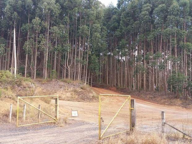 Caminhões eram escondidos em fazenda de eucalipto (Foto: Cláudio Nascimento/ TV TEM)