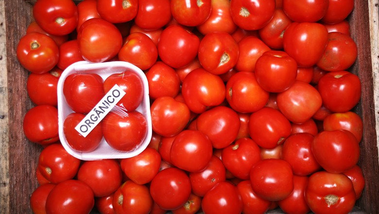 organico-tomate-alimentos (Foto: Globo Rural)