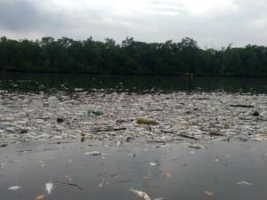 Centenas de peixes apareceram mortos em um mangue perto da Alemoa, em Santos (Foto: Rafaella Martinez / Arquivo Pessoal)