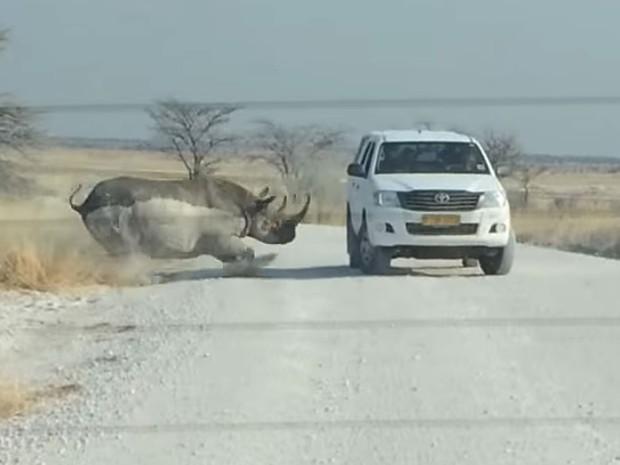 Momento do ataque do rinoceronte ao carro na Namíbia (Foto: Reprodução/Youtube/Alexandra Foier)