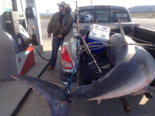 Joey Polk foi fotografado abastecendo o carro com tubarão de 365 kg na caçamba nos EUA (Foto: Reprodução/Imgur/Corpsman223)