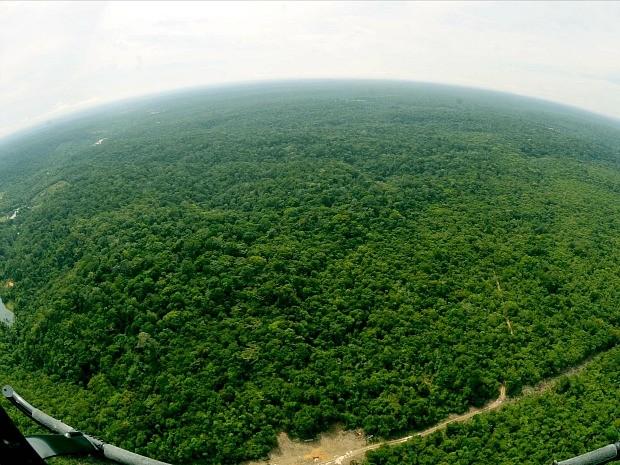 Florestal Adolpho Ducke, Zona Rural de Manaus, tem 10 mil hectares (Foto: Chico Batata/Agecom)