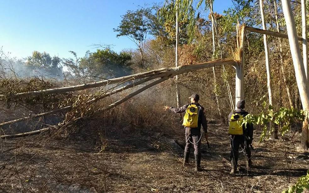 Árvore caiu em cima de rede elétrica de alta tensão (Foto: Bombeiros Militares da Bahia/Divulgação)