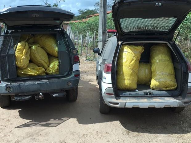 Viaturas foram usadas para transportar todo o material apreendido (Foto: Divulgação/SSP-MA)