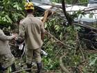 Avião que caiu e matou 3 em Goiás estava apto para voo, diz Anac